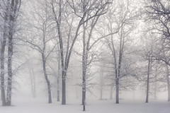 Shivery moments (beyondhue) Tags: cold frigid landscape park tree frost freezing beyondhue ottawa canada winter snow