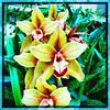 Aligned. #Usbg #botanicgarden #goodgarden #dcgarden #nationalgarden #washingtondc #dc #dclife #downtown #iphone #iphone365 #iphone7plus #iPhonemacro #macro  #flower #flowersofinstagram (Kindle Girl) Tags: iphone7plus usbg botanicgarden goodgarden dcgarden nationalgarden washingtondc dc dclife downtown iphone iphone365 iphonemacro macro flower flowersofinstagram