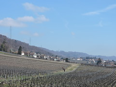 DSCN2718 (keepps) Tags: switzerland suisse schweiz spring vaud luins