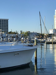 IMG_2840 (palebluejen) Tags: bird pelican boat 201803florida ftlauderdale pier