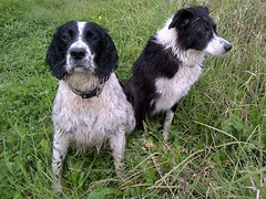The Loveable 2 (Kevin Pendragon) Tags: dogs outdoors summer walk siston common black white paws hair eyes waggingtails