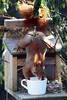 it's coffee time ♥ (bauingenieuse) Tags: kopfüber hanging tasse cup breakfirst frühstück besuch visit visitor lovely cute tannenäffchen squirrel eichhörnchen garten garden red rot süs herbst 2018 bauingenieuse bunt futterhaus feeder klappe entrance boy junge eichkater 200mm canon 80d ngc eingang hörnie coffee kaffee coffeelovers