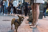 (Nikos Tsitsel) Tags: dog hamburg metro fear stress streetphotography calves whiteheels legs people germany sonyalpha7ii 35mm brown
