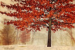 A Mid Winter's Dream (socalgal_64) Tags: carolynlandi snow winter trees leaves fall seasons seasonal pennsylvania lehighvalley northamptonpa texture nature landscape treeline colorful fog foggy coth5 eastallentownship usa texturebybefunky befunky