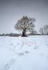 Crème Brûlée (Sarah_Brooks) Tags: snow ice icesnow crèmebrûlée lonetree landscape somerset oak winter grass stormemma beastfromtheeast