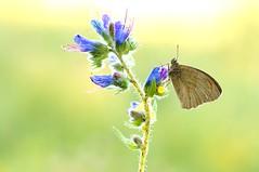 Color My World... (Zbyszek Walkiewicz) Tags: butterflies butterfly sony closeup macro