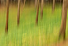 Two Valleys ICM - 20180309_1 (Graham Dash) Tags: icm twovalleys virginiawater windsorgreatpark daffodils flowers intentionalcameramovement trees