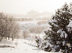 Snow in March (joningic) Tags: nature northiceland iceland snow winter white glerárhverfi akureyri town snowing natrue march 2018 urbannature urban