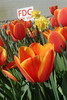 P3080129 (Vagamundos / Carlos Olmo) Tags: dallas usa eeuu vagamundos vagamundos2018 texas tejas flower flores jardín garden arboretum botanical botanicalgarden jardínbotánico