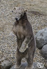 wildlands-emmen-7 (voorhammr) Tags: 2018 juul robin apen emmen giraffen ijsberen neushoorn nijlpaard pinquins prairiehonden vlinders wildlands zeeleeuwen zoo drenthe nederland nl