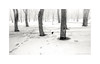 March. In the park (Alexandr Voievodin) Tags: park snow spring landscape trees crow bird fog blackandwhite monochrome xiaomiredminote2 ngc