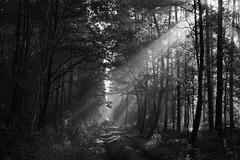 *** (pszcz9) Tags: przyroda nature natura polska poland baryczvalley dolinabaryczy światło light poranek morning las forest droga road jesień autumn beautifulearth sony a77 bw blackandwhite monochrome czarnobiałe pejzaż landscape