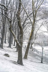 NYC Nor'easter Walk (hilarybachelder) Tags: throughherlens nyc noreaster storm snow snowfall sony a7rii above bokeh blizzard cold composition dof fullframe frame freezing landscape leadinglines lines manhattan mirrorless magical ngc nycparks park peaceful quiet tranquil riversidepark riversidedrive sonya7rii season sony50mm28macro snowstorm snowflake snowday snowflakes snowing snowy tree trees uws upperwestside path vantagepoint viewpoint view winter weather springstorm solitary solitude muted mutedcolors