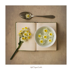 Primavera incipiente..... (.... belargcastel ....) Tags: still stilllife bodegon flores flowers narciso cuchara libro texturas spoon book belargcastel belénargüeso españa spain galicia