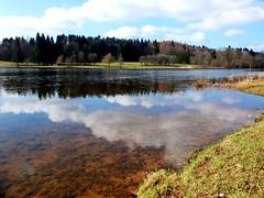 Am Stausee in Losheim (Saarland) (Antje_Neufing) Tags: stausee losheim saarland see wasser reflection spiegelung wolken sonne baum ufer natur deutschland frühling wetter