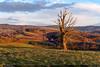 Na pastvinách (jirka.zapalka) Tags: jasenna spring czech landscape trees clouds evening pasture meadow field