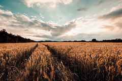 Sommerhauch (Gruenewiese86) Tags: 2016 canon haida harz landschaft mohn mohnfeld sonnenuntergang tamron landscape orange teal landschaftlich summer sun ohenze