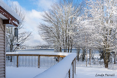 Winter in rural Nova Scotia (londa.farrell) Tags: 2018 canada landscape march mcgrathlake novascotia rawdon upperrawdon backyard daytime morning outdoor snow trees winter