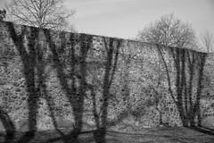 shadows on the wall (Rene_1985) Tags: sony a7 ii ilce leica 50mm 095 asph noctilux schwarz weis monochrom bricks shadow schatten