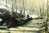 Tavasz a Pilisben (My Life In Picture: PauerArt) Tags: magyarország pilis áradás tavaszierdő erdeipatak ördögmalomvízesés kirándulás erdeikirándulás hungary duna dunaiáradás zubogás vízesés pilisivízesés szentendre hegyekenát lezúdulóvíz fák erdeihavastáj apátkútivölgy visegrád pilisszentlászló szentlászlóvölgy kutyabarátkirándulóhely