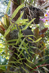 IMG_9891 (jaglazier) Tags: 2018 31518 ferns florida march marieselbybotanicalgardens museums plants sarasota spores usa copyright2018jamesaglazier gardens