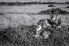 Black & White Royal Pair (MWVVerb) Tags: 2015 kenya mara masai migration triangle wildeye