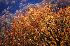 IMG_3733_Smoky Mountains (Alex Hsieh (椰子人)) Tags: ç´è² smokymountains smokymountainsnationalpark nationalpark 2016 fall fallfoliage autumn roadtrip travel tennessee northcarolina tn usa canon canon6d 6d