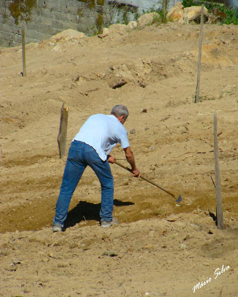 Águas Frias (Chaves) - ... trabalhando a terra árida ...