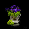 Cup garden (Magda Banach) Tags: canon canon80d sigma150mmf28apomacrodghsm blackbackground blue colors flora flower flowers green macro nature plants dish