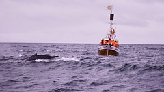 Whale Watching from Húsavík III (santicabrero) Tags: ballenas whales húsavík skjálfandi bahía bay barco ship sea ocean mar holidays iceland islandia landscape naturaleza nature paisaje sonya6000 sonyalpha tourist travel turistas vacaciones viaje