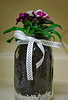 Dianthus In A Jar. (dccradio) Tags: lumberton nc northcarolina robesoncounty wall background ribbon polkadot craftproject plant plantinajar leaves leaf greenery purple flower floral fishaquariumgravel stones pretty beauty nature nikon d40 dslr photooftheday project365 photo365