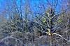 Snowy Tree (pmorris73) Tags: montague massachusetts century 2cee 3cee 4cee 5cee 6cee 7cee 8cee