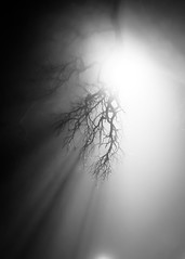 beneath the veil (Clickumentary) Tags: blackandwhite bw shadows mist fog foggy environment light shadow shadowy