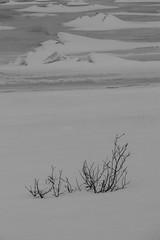 paysage (mimu_13) Tags: europe no nor norvège norway troms tromsfylke tromso tromsø blackandwhite couleurs givre glace hiver neige noiretblanc saisons vinter winter samsungnx nx500 kvaløya
