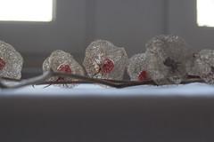 Physalis III (Maria Vladimirskaya -) Tags: stilllife stillleben naturalezamuerta naturallight 50mm натюрморт