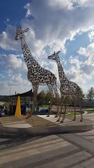 Giraffe Sculpture (Rckr88) Tags: giraffe giraffesculpture sculpture statue art publicart mall malls mallofafrica johannesburg gauteng south africa southafrica travel