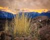 Needle Grass (dwblakey) Tags: grass hike desert plants bishop evening rocks california easternsierra needlegrass hiking sunset sky clouds inyocounty volcanictableland volcanictablelands stipa unitedstates us