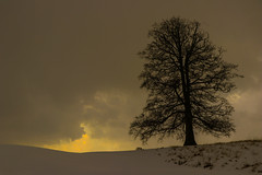 Storm brewing (A Costigan (Off for a while)) Tags: sky clouds tree silhouette snow winter weather