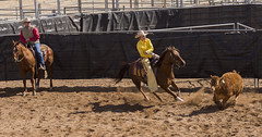 Cutting out (craig21746) Tags: arizona scottsdale westworld arabianhorse arabianhorseshow cow cowgirl cowboy nikon nikond7200 nikon70200mmf4