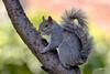 Squirrel (jt893x) Tags: 150600mm bird d500 graysquirrel jt893x nikon nikond500 rodent sciuruscarolinensis sigma sigma150600mmf563dgoshsms squirrel coth thesunshinegroup alittlebeauty coth5