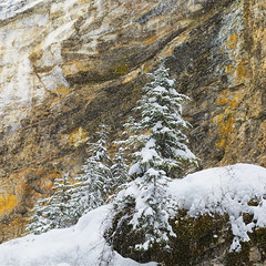Let it Snow (andrewpmorse) Tags: snow winter trees rocks intimate landscape landscapes art blizzard weather colour canon canon5dmarkiv 5dmarkiv 2470f28lii leefilters leelandscapepolarizer canada banff banffnationalpark nationalpark nationalparks naturalframe alberta
