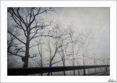 Neurosis en la Tierra y sin miedo... (V- strom) Tags: niebla fog forest naturaleza nature monte árbol arboleda grove concepto concept cielo sky blanconegro blackwhite monocromo monochrome nikon nikon2470 nikond700 irix15mm vstrom paisajes landscape invierno winter texturas textures