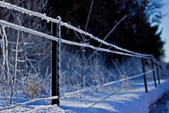 Optical Confusion (Bob's Digital Eye) Tags: bobsdigitaleye canon depthoffield ef50mmf18ii fence fencedfriday flicker flickr frost hoarefrost ice march2018 metal snow snowscene t3i winter winterinmn backlit