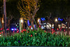 beach street tulip bed (pbo31) Tags: bayarea california nikon d810 night boury pbo31 march 2018 color sanfrancisco black green pier39 fishermanswharf tulips flowers flora garden spring embarcadero