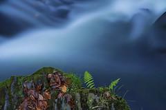 Blue Water in the Mountains (Fotografie Harz) Tags: blue water wasser mountains harz selke farn blau grün pflanzen bach wasserfall waterfall harzmountains berge naturwunderharz natur landscape langzeitbelichtung sony a7ii nass landschaft tree longexposure bulb