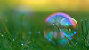 Bubbles at daybreak (Ron and Co.) Tags: bubble soapbubble reflection refraction colour grass frost dew depthoffield lowangle macro