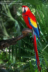 Parrot -  Xel-Ha Mexico (sminky_pinky100 (In and Out)) Tags: parrot xelha mexico bird colourful feathers vacation wildlife pretty omot tropical palms outdoors foliage