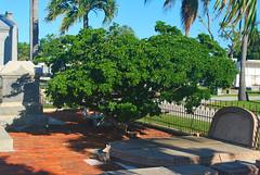 Key West (Florida) Trip 2017 0174Ri 4x6 (edgarandron - Busy!) Tags: florida keys floridakeys keywest cemetery cemeteries keywestcemetery