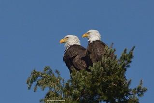 Skinner butte eagles