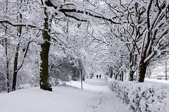 Sous la neige - (Noir et Blanc 19) Tags: neige iledefrance forêt sony a77